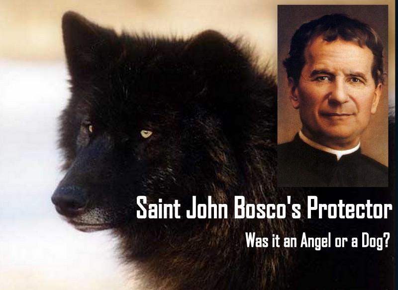 St John S Dog Food
