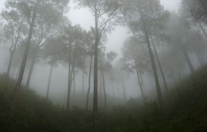 low-cloud-fog_13949_600x450